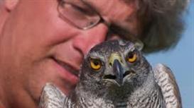 Vogelakker moet kiekendief in Flevoland houden